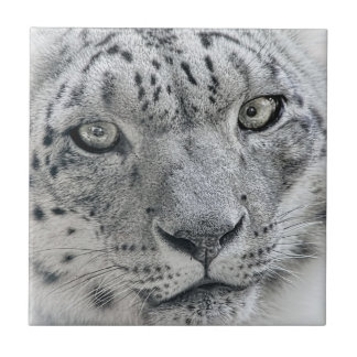Exotic White Snow Leopard Tile