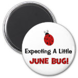 Expecting A Little June Bug Maternity Magnets