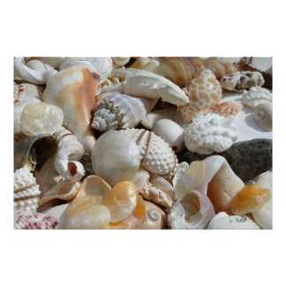 Extra Large Seashell Photography Poster