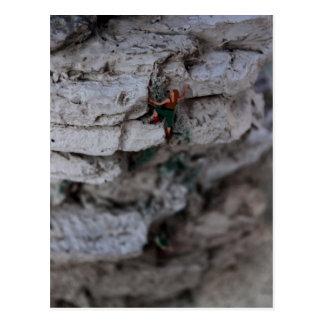 Extreme Climber Postcard
