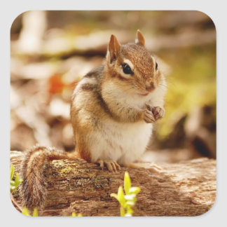 Extremely Cute Chipmunk Square Sticker