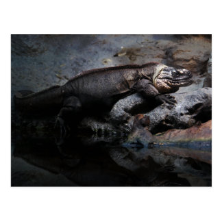 Exuma Island iguana Postcard