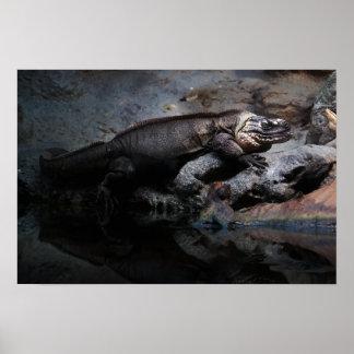 Exuma Island iguana Poster