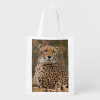 Eye-catching Cheetah Portrait - Wild Cats Reusable Grocery Bag