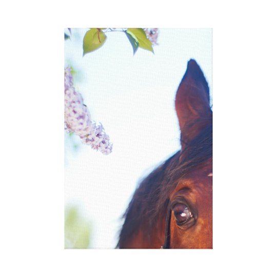 eye of horse. horse collection canvas print