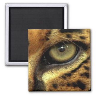 EYE OF JAGUAR Big Cat Wildlife Magnet