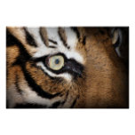 Eye of the tiger poster