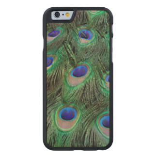 Eye-spots on Male Peacock feather Carved Maple iPhone 6 Case