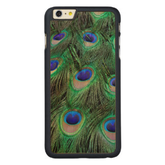 Eye-spots on Male Peacock feather Carved® Maple iPhone 6 Plus Case
