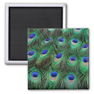 Eye-spots on Male Peacock feather Square Magnet