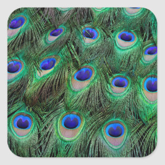 Eye-spots on Male Peacock feather Square Sticker