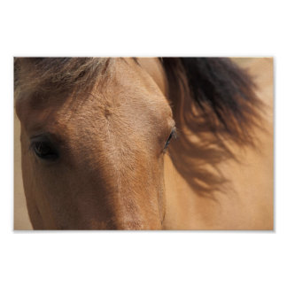 Eyes of a Brown Horse Poster
