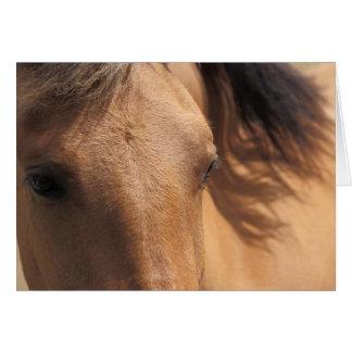 Eyes of a Horse Card