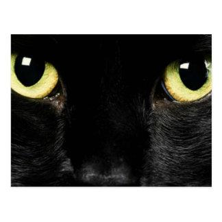 Eyes of cat postcard