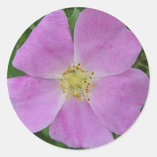 F0011 Prairie Wild Rose (Rosa Arkansana) Round Sticker