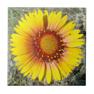 F0017 Yellow Wildflower Gaillardia Ceramic Tiles