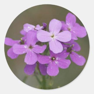 F0019 Purple Wildflowers Dames Rocket Classic Round Sticker