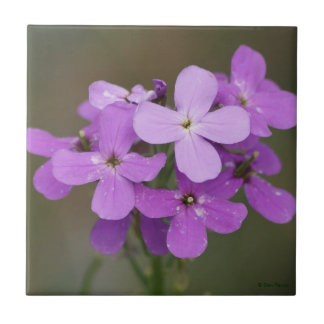 F0019 Purple Wildflowers Dames Rocket Tiles