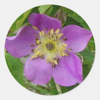 F0024w Wild Rose (rosa acicutaris) Round Sticker