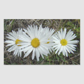 F0042 White Wildflowers Smooth Aster