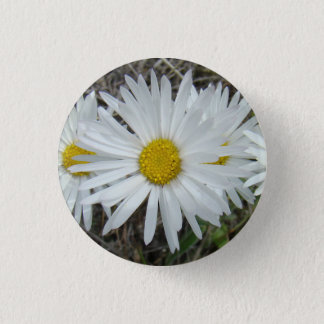 F0042 White Wildflowers Smooth Aster 1 Inch Round Button
