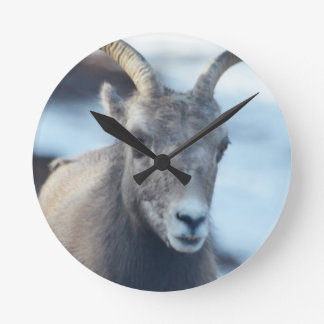 Face of a Bighorn Sheep Clocks