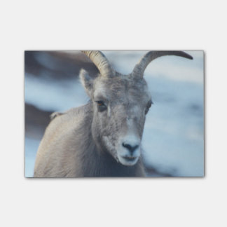 Face of a Bighorn Sheep Post-it Notes