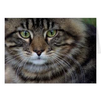 Face of a Feline (Cat) Card