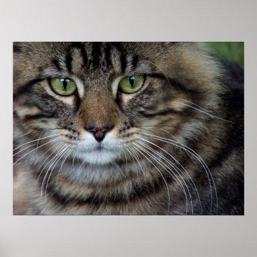 Face of a Feline (Cat) Fine Art Print