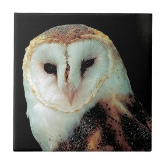 Face of Barn Owl Photo Tile