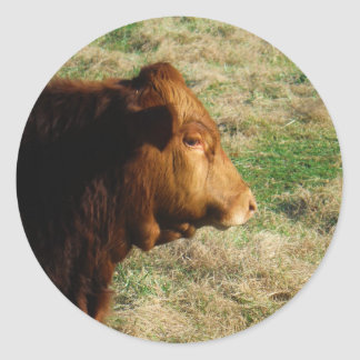 Face of Brown bull cow Round Sticker