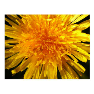 Face of dandelion - Postcard for MS JOH 2011