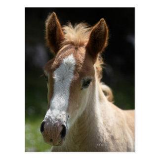 face of foal postcard