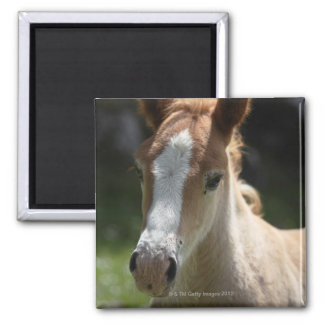 face of foal square magnet