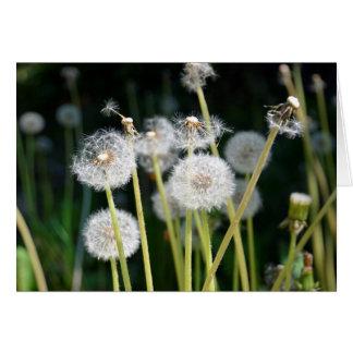 Faded dandelions card