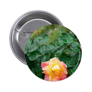 Fades wet autumn rose with blur 2 inch round button