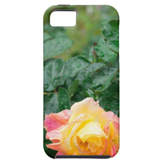Fades wet autumn rose with blur case for the iPhone 5