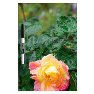 Fades wet autumn rose with blur dry erase board
