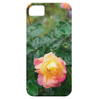 Fades wet autumn rose with blur iPhone 5 cases
