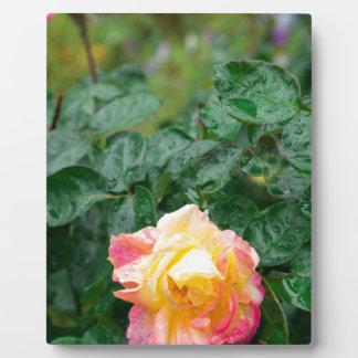 Fades wet autumn rose with blur plaque