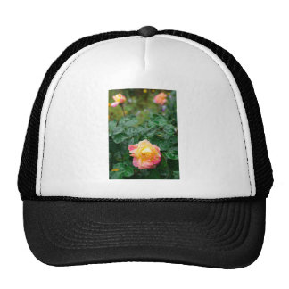 Fades wet autumn rose with blur trucker hat