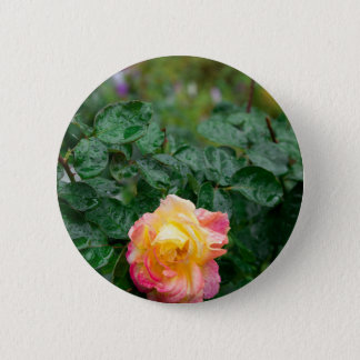 Fades wet rose with drops of  rain 2 inch round button
