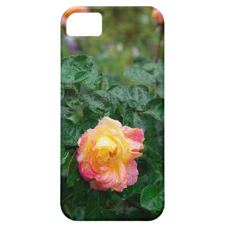 Fades wet rose with drops of  rain case for the iPhone 5