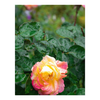 Fades wet rose with drops of  rain customized letterhead
