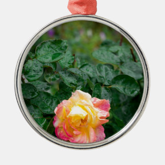 Fades wet rose with drops of  rain metal ornament