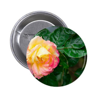 Fading autumn rose 2 inch round button