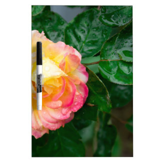 Fading autumn rose dry erase board