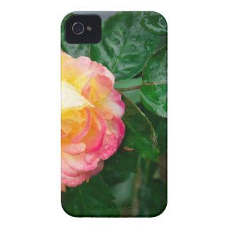 Fading autumn rose iPhone 4 Case-Mate case