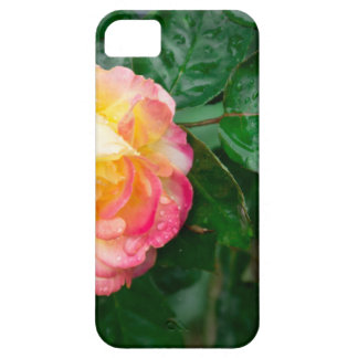 Fading autumn rose iPhone 5 covers