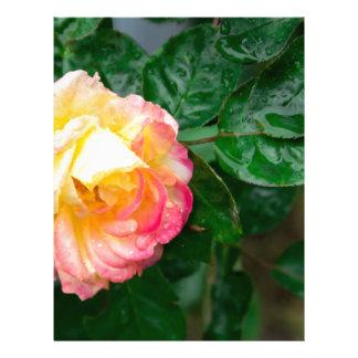 Fading autumn rose letterhead